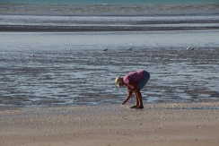 Collecting shells