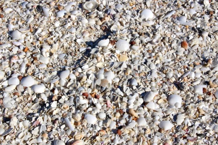 So many shells........