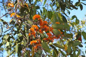 Burst of colour in Gulf Savannah