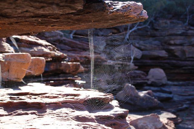 Cobwebs at Kalbarri