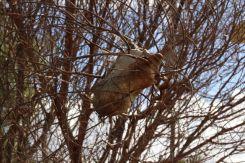 Birds Nest in Spiders web