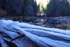 Frosty Logs