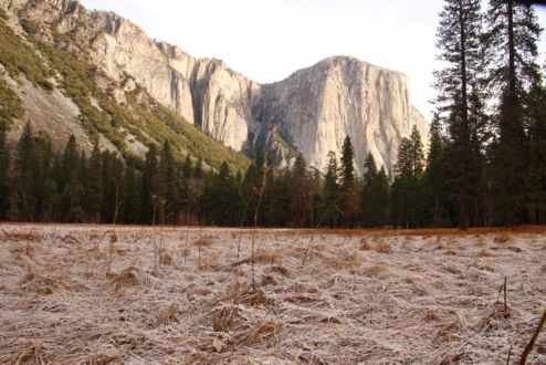 Frosty morning in the meadow below El Capitan