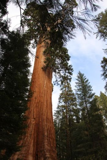 Grant Tree, the Nation's Christmas Tree