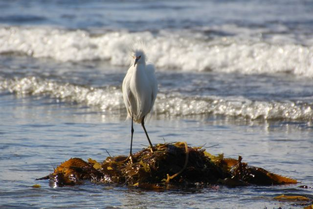 King of the seaweed or hoping to catch a wave, I wasn't sure