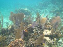 Barrier Reef Belize