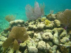 Barrier Reef Belize