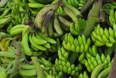 Farmers Market, San Ignacio