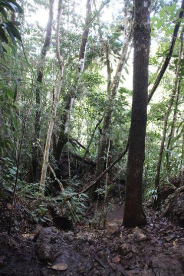 Trail to El Mirador