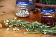 Plants as Medicine lecture