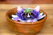 Passion flower, great as a tea for anxiety as its a hypnotic