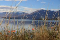 Lake Tekapo from the shore line