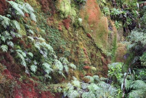 Have never seen so many colours of moss, reminded me of sea coral