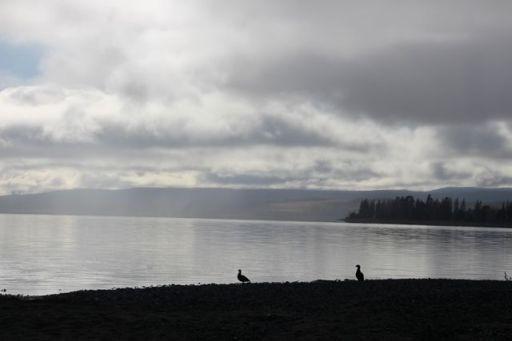 On the shore of Lake Te Anau