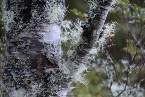 Lichen & Bark