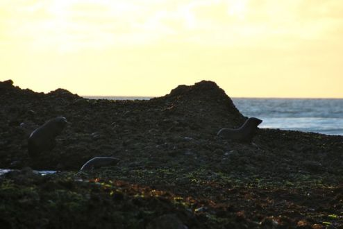 Sunset Seals