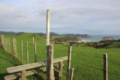 Wharariki Beach in the distance