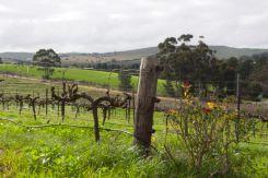 Vines at Crabtree