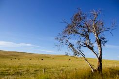 Quick Roadside snaps outside Cooma