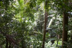 Rainforest chaos and colour, Mt Warning