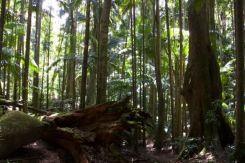 Forest Floor, Mt Warning