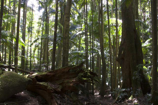 Forest Floor, Mt Warning