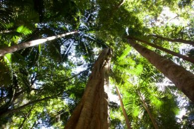 Looking up on the trail at Mt Warning