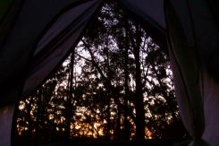 First glimpse of a new day, with a hint of a sunrise behind the trees, Blue Mountains