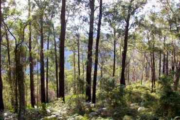 Perrys Lookdown Trail