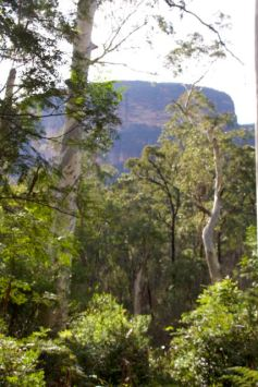 Blue Gum Forest, Blue Mountains